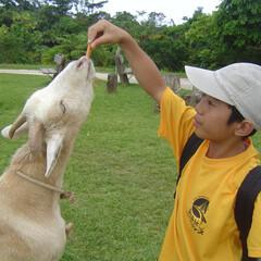 休日/ヤギ/餌/おでかけワンショット 休日におでかけ。ヤギに餌をあげ楽しい一日…