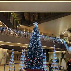 クリスマス2019 コトノハコ神戸
