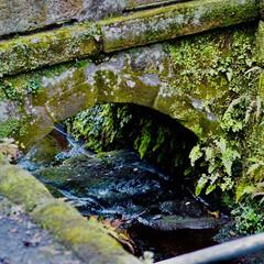 おでかけワンショット/鎌倉/川/水/苔/トンネル/... 鎌倉におでかけした時に撮りました 苔の感…