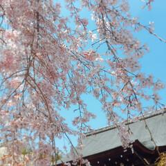 おでかけワンショット #京都 #嵐山 #お出かけワンショット …