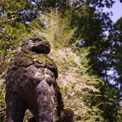 はじめてフォト投稿/箱根神社/狛犬 箱根神社を守る狛犬様に、力強さや気迫を感…