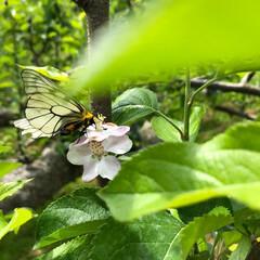 蝶/はじめてフォト投稿 山の中で黙々と仕事。お天気も良く、鳥のさ…
