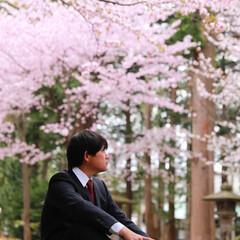 GW旅行/北海道/桜/桜満開/おでかけワンショット 北海道の桜