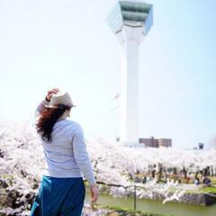 GW旅行/五稜郭/桜満開/おでかけワンショット GW旅行  北海道の五稜郭。 桜満開で絶…