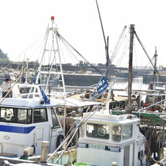 漁師/島めぐり/おでかけワンショット 平日に島めぐり。 漁師さんのお仕事の風景…