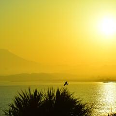 富士山/海/夕暮れ/鳥/かもめ/とんび/... 夕暮れ時になり鳥たちも棲み処へ向かいます。(1枚目)