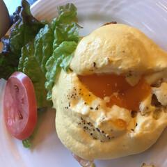 エッグベネディクト/朝/初/わたしのごはん 初エッグベネディクト。 朝からこれを食べ…