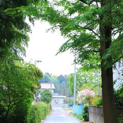 はじめてフォト投稿/散歩道/おでかけ/風景/田舎 散歩道 行ってみたくなる向こう側