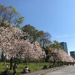 初めてフォト/はじめてフォト投稿 桜の花がさく平成のおわり。