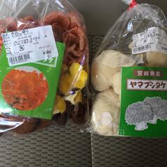 道の駅/えびの/スタンプラリー/おでかけワンショット カラフルな椎茸や、もさもさな椎茸とか、珍…