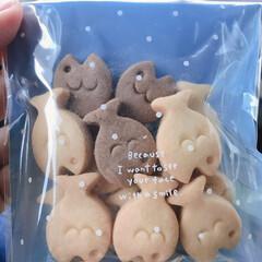 道の駅/大分県/佐賀関/クッキー/おでかけワンショット 猫の恩返しに出てくるみたいな、魚のクッキ…