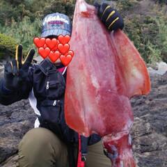 イカ/釣り/釣り部/はじめてフォト投稿 2年前の写真を見つけたので投稿します🦑 …