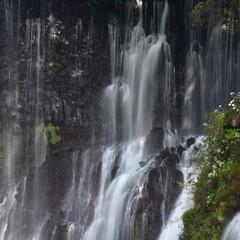 滝/白糸の滝 白糸の滝です。 岩の切れ目から湧き水が出…