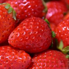 イチゴ/苺/スカイベリー 人生初のスカイベリーを食べたときの写真で…