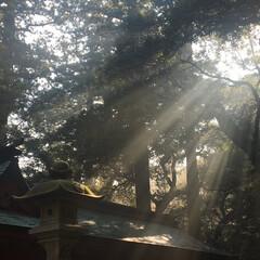 朝/鹿島神宮/木漏れ日 鹿島神宮の木漏れ日です。  撮影地:鹿島…