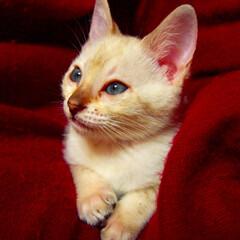 うちの子自慢/猫 家族全員メロメロです
