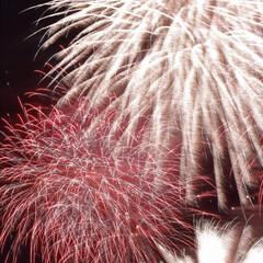 カメラ/一眼レフ/Canon/カウントダウン/お正月/謹賀新年/... 明けましておめでとうございます。すっかり…(1枚目)