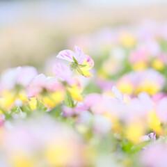 フワフワ/ボケ写真/ボケフォト/明るい写真/逆光/透明感/... フワフワ写真が撮れました。 知多半島の観…