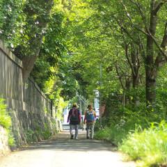 おでかけワンショット 自然豊かな緑の中のお散歩は気持ちいいもの…