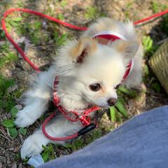 犬/おでかけ/散歩/日光浴/チワワ/おでかけワンショット