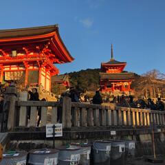 寺/京都/おでかけ/正月/おでかけワンショット 京都の清水寺