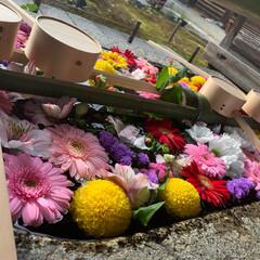 花/京都/和/自然/はじめてフォト投稿 春に訪れた京都での写真です。 花の色がす…