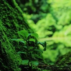 #はじめてフォト投稿/はじめてフォト投稿 石川県の名も知らぬ池のほとりでの一枚