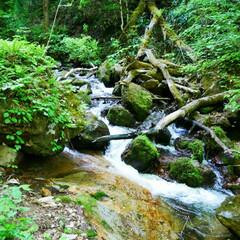 渓流/緑いっぱい/令和元年フォト投稿キャンペーン/令和の一枚/旅行/風景/... 不動の滝の渓流📷