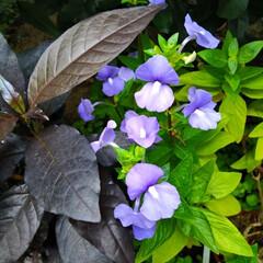 おしゃれ 薄紫色もオシャレ😁
