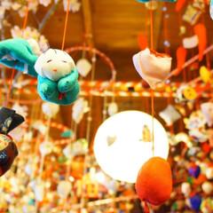 アオムシ/青虫/天井飾り/はじめてフォト投稿 天井からぶら下がる飾りの中に ニョッキ見…
