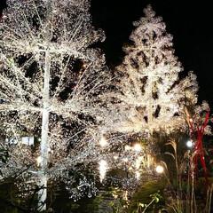 ガラスの森美術館/箱根/みんなにおすすめ クリスマスのガラスの森はとってもキレイです