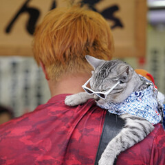 猫/三社祭/屋台/サングラス/はじめてフォト投稿 浅草三社祭で見かけたネコちゃん。
