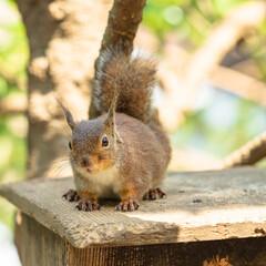 井の頭公園/ニホンリス/リス/リスの小径/はじめてフォト投稿 最近リスにはまって井の頭公園に行った時の…