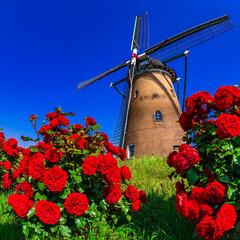 風車/バラ/ふるさと広場/青空/おでかけワンショット バラと風車が同時に楽しめる場所