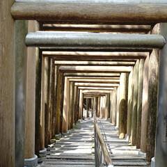 神社/鳥居/奈良/パワースポット/神社巡り/はじめてフォト投稿/... ずっと続く鳥居が綺麗。お気に入りの鳥居☆