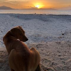 犬/イヌ/ドッグ/ペット/pet/かわいい/... お気に入りのワンコです。 一緒に夕日を楽…