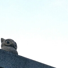 おでかけワンショット/フクロウ/置物/御影石 夕方のジョギング中に発見したフクロウ