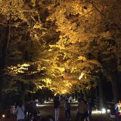 おすすめスポット/デートスポット/ライトアップ/紅葉スポット/おでかけ 東京の立川市にある 昭和記念公園の夜間ラ…