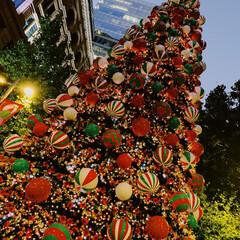 オーストラリア/シドニー/真夏のクリスマス/わたしのお気に入り シドニーの真夏のクリスマス