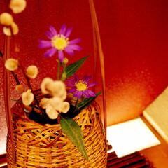 生け花/自作/都忘れ/ネコヤナギ/フォロー大歓迎/わたしのお気に入り/... お店の飾り棚に飾るための生け花を作成。 …