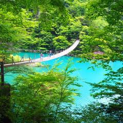 夢の吊り橋/静岡/山/おでかけワンショット 夢の吊り橋 真ん中で願い事をすると叶うと…