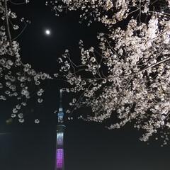 月/桜/夜景/スカイツリー/夜桜/わたしのお気に入り 月、桜、夜、スカイツリー 大好きなものが…
