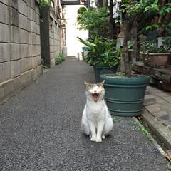 猫/ネコ/ねこ/ニャンコ/野良猫/自由猫/... 出張先で出会ったニャンコちゃん。