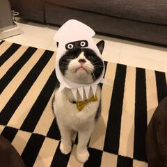 猫/ネコ/cat/ハチワレ/はちわれ/被り物/... お手製の被り物?でコスプレ中のアイザック…