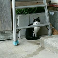 猫/保護猫 最近のモ~ちゃん。 すっかり美人さんに成…