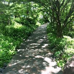 私のお気に入り/木漏れ日の小道/わたしのお気に入り 木漏れ日の小道 ゆっくり、まったり。今日…