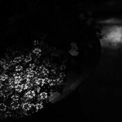 明暗/モノクロ/スポットライト/はじめてフォト投稿 スポットライト   明暗分かれる場所。 …