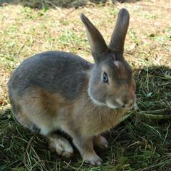 #はじめてフォト投稿/ウサギ/はじめてフォト投稿 キリッとしたウサギ