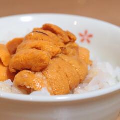 ウニ/雲丹/うに丼/わたしのごはん ウニを頂いたので、ウニ丼で食べました!