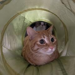猫のいる暮らし/LIMIAペット同好会/四姉妹/次女/三女 奥にもいますねぇ(*≧艸≦)(1枚目)